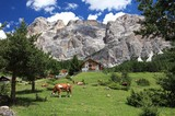 Kühe auf der Weide mit Lagazoi (2835m)