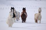 Pferde in verschneiter Landschaft