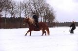 Skijöring mit Pferd
