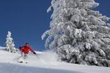 Tiefschnee Skifahrer