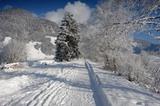 Winterwandern in der Olympiaregion Seefeld